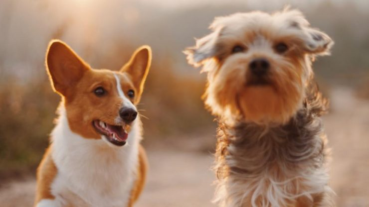 Manage your pet's health